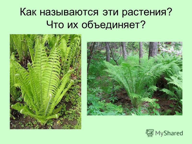 Как называются эти растения? Что их объединяет?