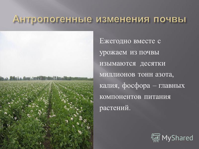 Ежегодно вместе с урожаем из почвы изымаются десятки миллионов тонн азота, калия, фосфора – главных компонентов питания растений.