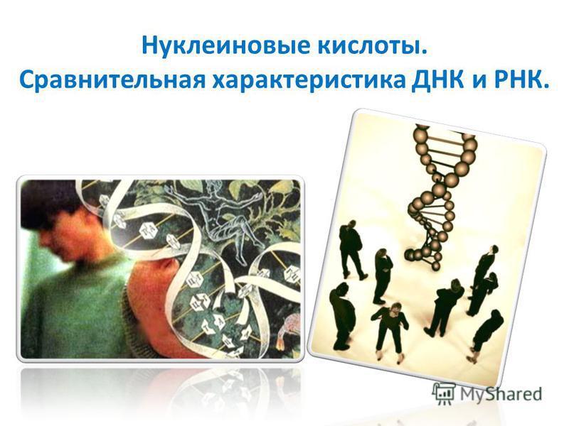 Нуклеиновые кислоты. Сравнительная характеристика ДНК и РНК.