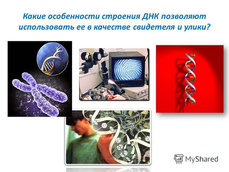 Какие особенности строения ДНК позволяют использовать ее в качестве свидетеля и улики?