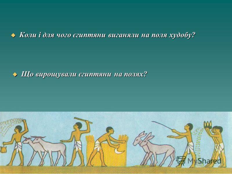 Коли і для чого єгиптяни виганяли на поля худобу? Коли і для чого єгиптяни виганяли на поля худобу? Що вирощували єгиптяни на полях? Що вирощували єгиптяни на полях?