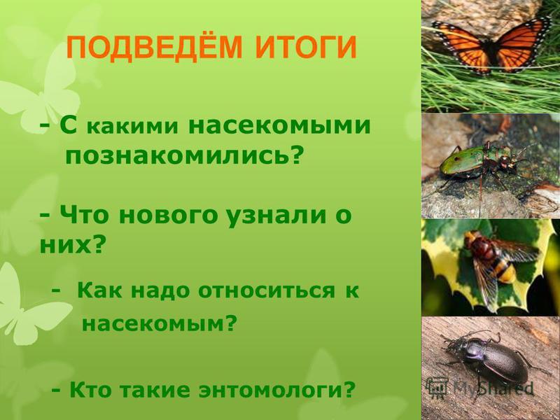 - С какими насекомыми познакомились? - Что нового узнали о них? - Как надо относиться к насекомым? - Кто такие энтомологи? ПОДВЕДЁМ ИТОГИ