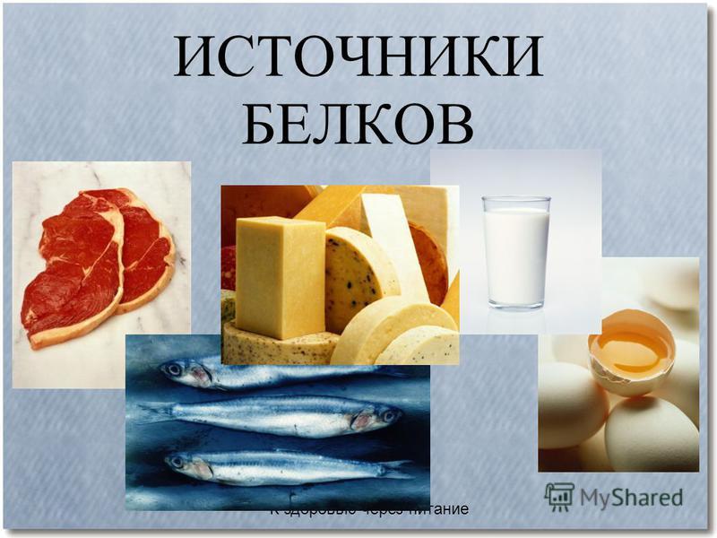К здоровью через питание ФУНКЦИИ БЕЛКОВ