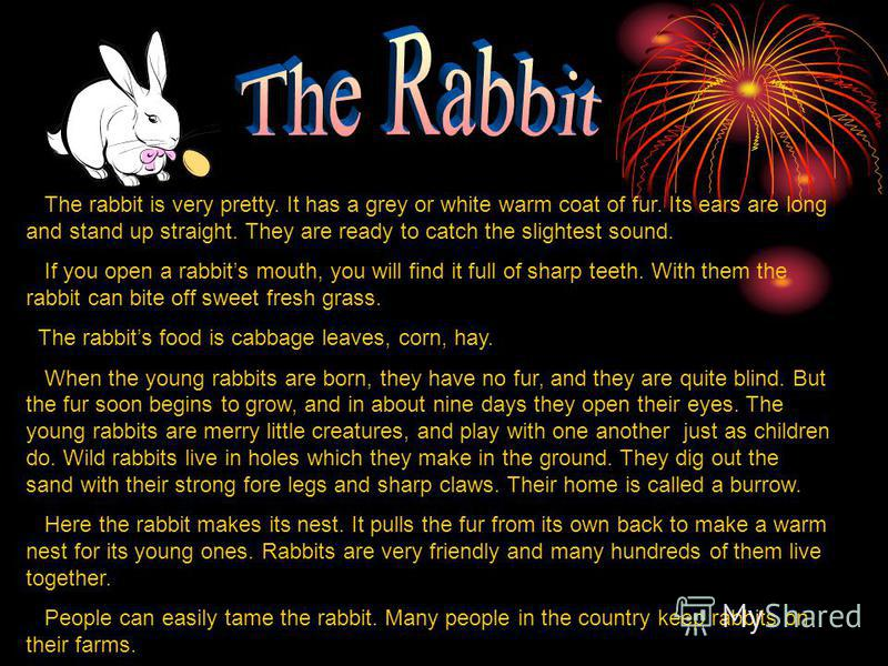 The rabbit is very pretty. It has a grey or white warm coat of fur. Its ears are long and stand up straight. They are ready to catch the slightest sound. If you open a rabbits mouth, you will find it full of sharp teeth. With them the rabbit can bite