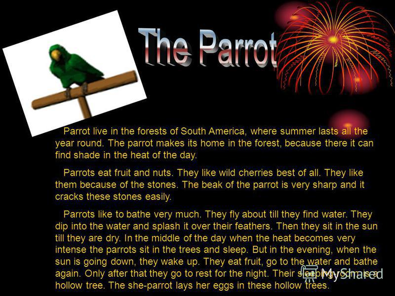 Parrot live in the forests of South America, where summer lasts all the year round. The parrot makes its home in the forest, because there it can find shade in the heat of the day. Parrots eat fruit and nuts. They like wild cherries best of all. They