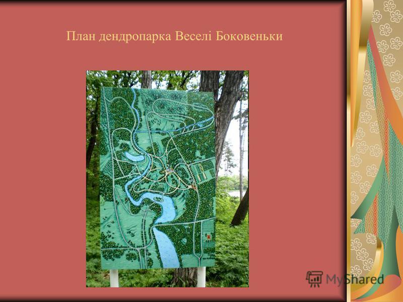 План дендропарка Веселі Боковеньки
