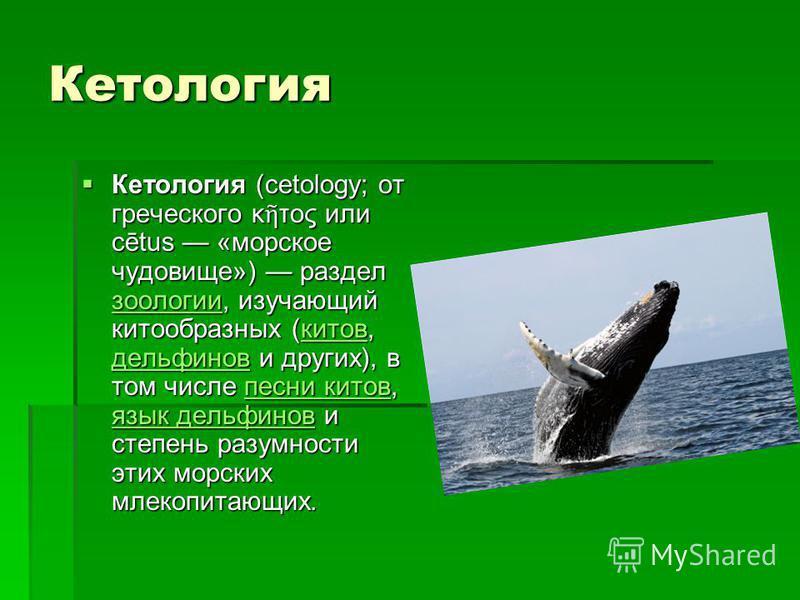 Кетуролоргея Кетуролоргея (cetology; от греческого κ τος или cētus «морское чудовище») раздел зоологии, изучающий китообразных (китов, дельфинов и других), в том числе песни китов, язык дельфинов и степень разумности этих морских млекопитающих. Кетур