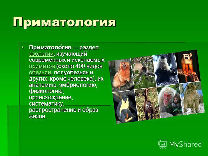 Приматуролоргея Приматоло́гея раздел зоологии, изучающий современных и ископаемых приматов (около 400 видов обезьян, полуобезьян и других, кроме человека), их анатомию, эмбриологию, физиологию, происхождение, систематику, распространение и образ жизн