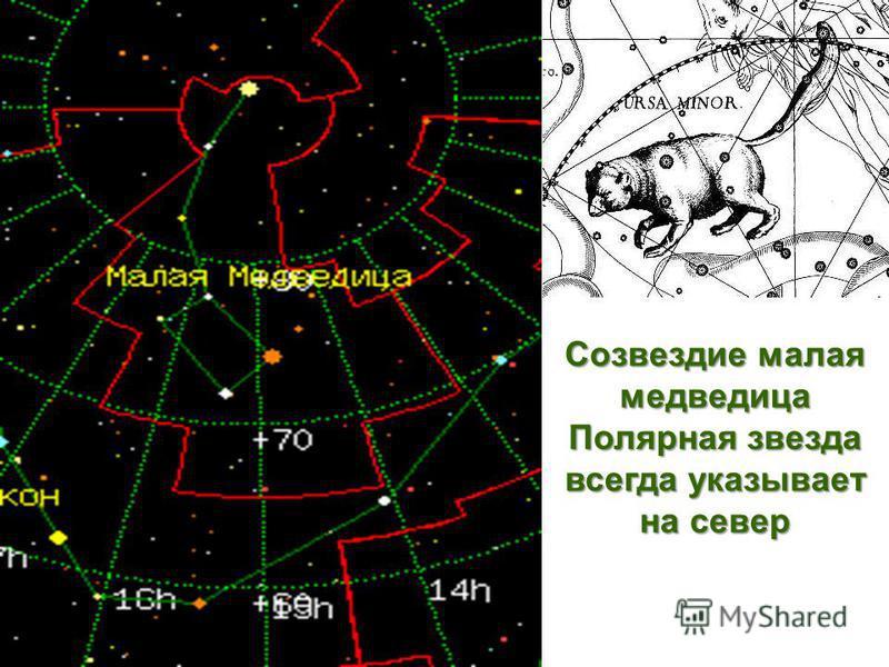 Созвездие малая медведица Полярная звезда всегда указывает на север