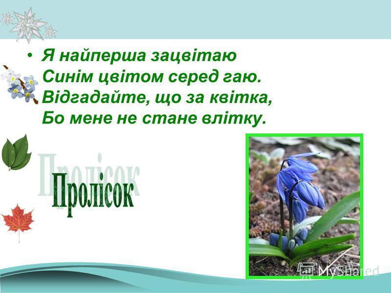 Я найперша зацвітаю Синім цвітом серед гаю. Відгадайте, що за квітка, Бо мене не стане влітку.