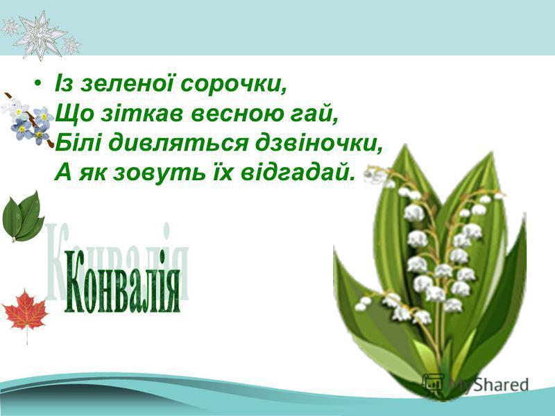 Із зеленої сорочки, Що зіткав весною гай, Білі дивляться дзвіночки, А як зовуть їх відгадай.