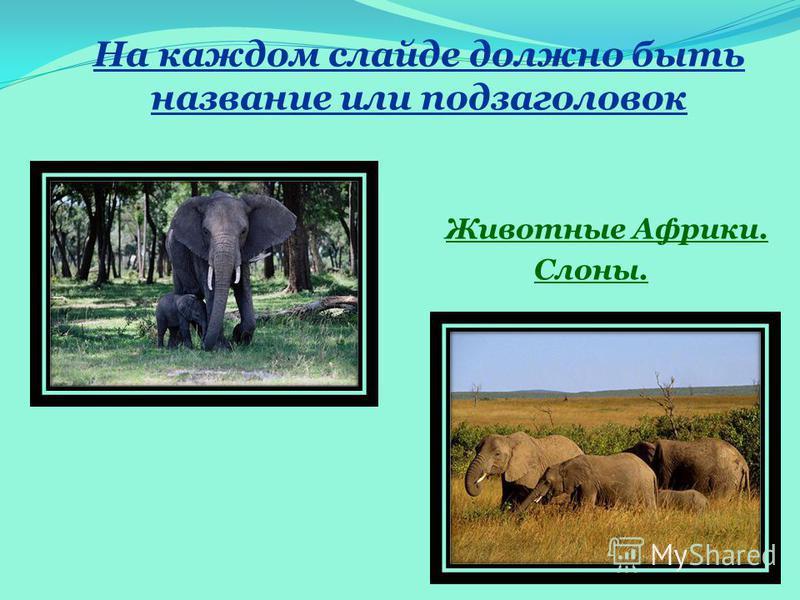На каждом слайде должно быть название или подзаголовок Животные Африки. Слоны.