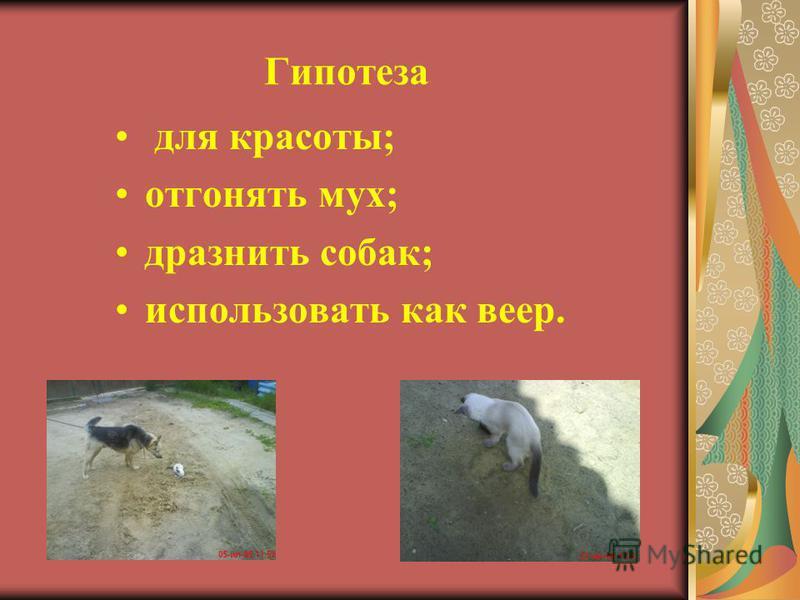 Гипотеза для красоты; отгонять мух; дразнить собак; использовать как веер.