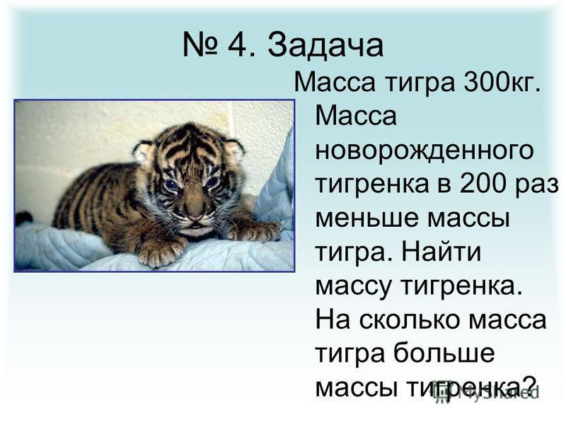 4. Задача Масса тигра 300 кг. Масса новорожденного тигренка в 200 раз меньше массы тигра. Найти массу тигренка. На сколько масса тигра больше массы тигренка?