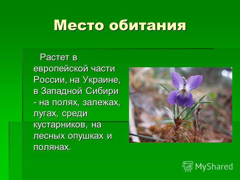 Место обитания Место обитания Растет в европейской части России, на Украине, в Западной Сибири - на полях, залежах, лугах, среди кустарников, на лесных опушках и полянах.