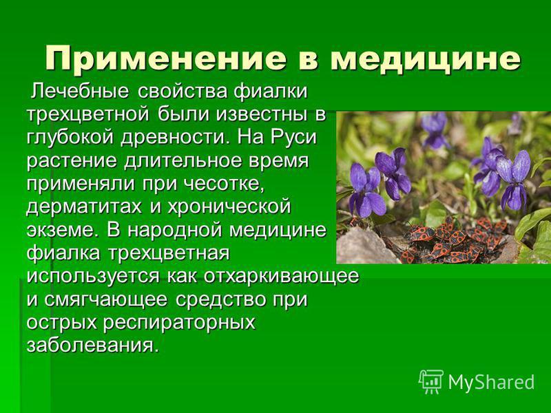 Применение в медицине Лечебные свойства фиалки трехцветной были известны в глубокой древности. На Руси растение длительное время применяли при чесотке, дерматитах и хронической экземе. В народной медицине фиалка трехцветная используется как отхаркива