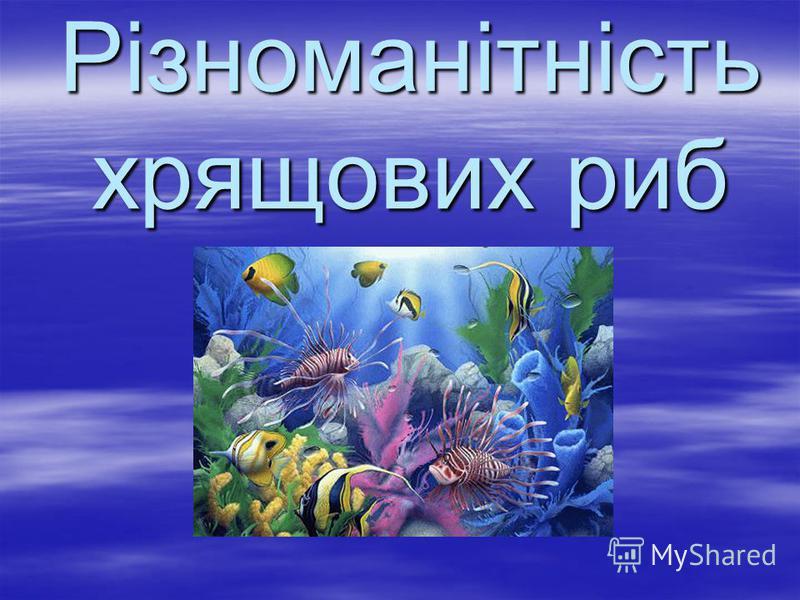 Різноманітність хрящових риб