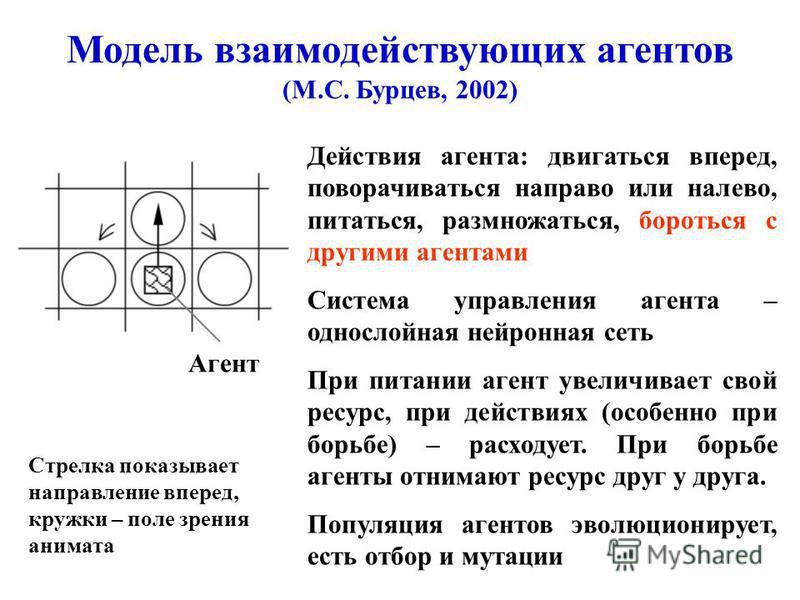 Модель взаимодействующих агентов (М.С. Бурцев, 2002) Агент Действия агента: двигаться вперед, поворачиваться направо или налево, питаться, размножаться, бороться с другими агентами Система управления агента – однослойная нейронная сеть При питании аг