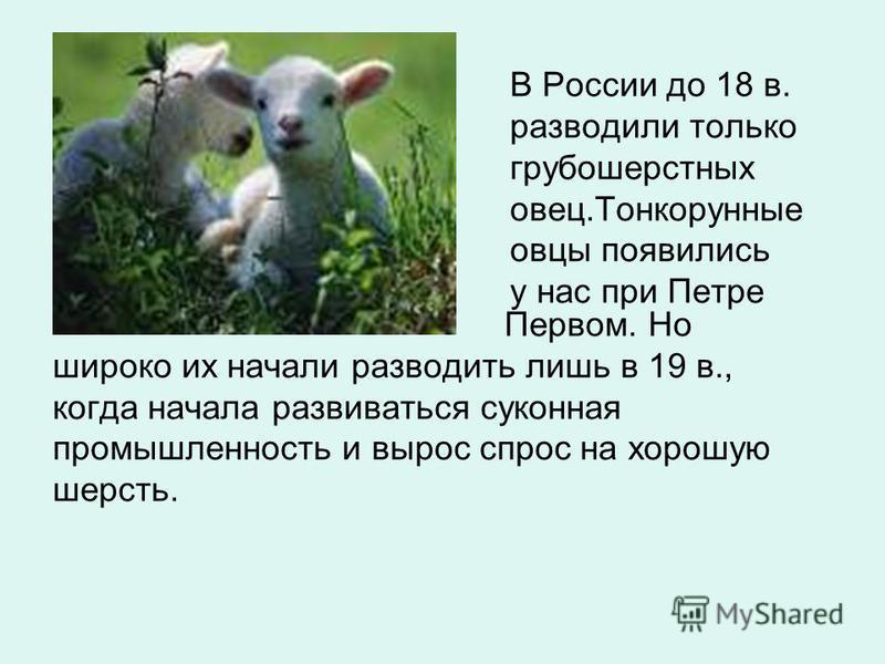 В России до 18 в. разводили только грубошерстных овец.Тонкорунные овцы появились у нас при Петре Первом. Но широко их начали разводить лишь в 19 в., когда начала развиваться суконная промышленность и вырос спрос на хорошую шерсть.
