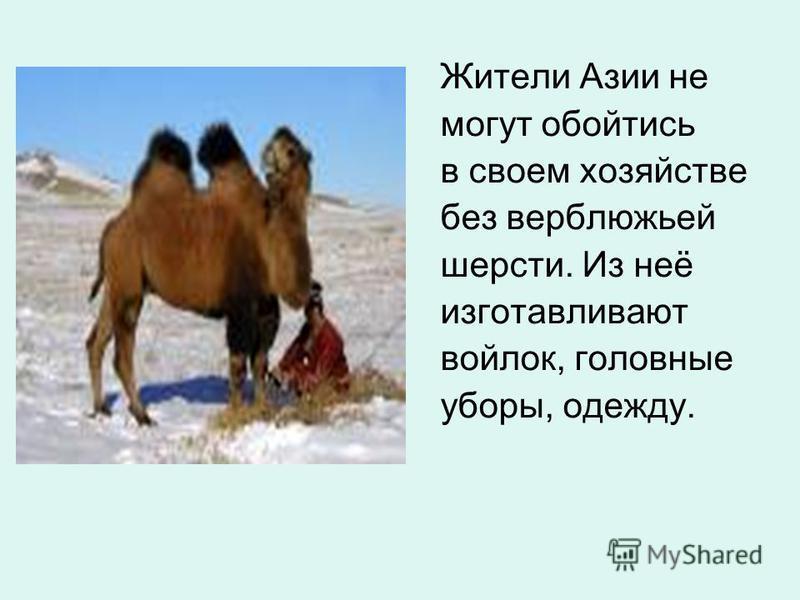 Жители Азии не могут обойтись в своем хозяйстве без верблюжьей шерсти. Из неё изготавливают войлок, головные уборы, одежду.