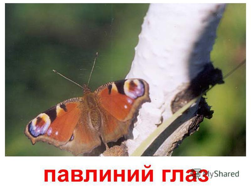 бабочка Атласный шелк