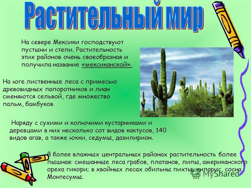 На севере Мексики господствуют пустыни и степи. Растительность этих районов очень своеобразная и получила название «мексиканской». Наряду с сухими и колючими кустарниками и деревцами в них несколько сот видов кактусов, 140 видов агав, а также юкки, с