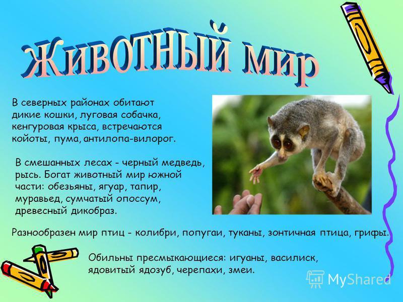 В северных районах обитают дикие кошки, луговая собачка, кенгуровая крыса, встречаются койоты, пума, антилопа-вилорог. В смешанных лесах - черный медведь, рысь. Богат животный мир южной части: обезьяны, ягуар, тапир, муравьед, сумчатый опоссум, древе