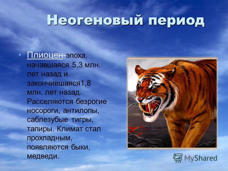 Неогеновый период Плиоцен- эпоха, начавшаяся 5,3 млн. лет назад и закончившаяся 1,8 млн. лет назад. Расселяются безрогие носороги, антилопы, саблезубые тигры, тапиры. Климат стал прохладным, появляются быки, медведи.