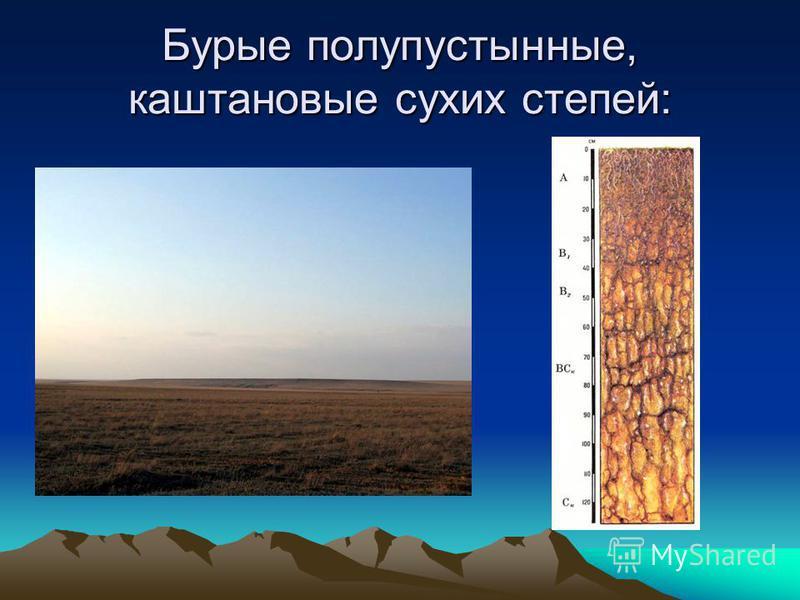 Бурые полупустынные, каштановые сухих степей: