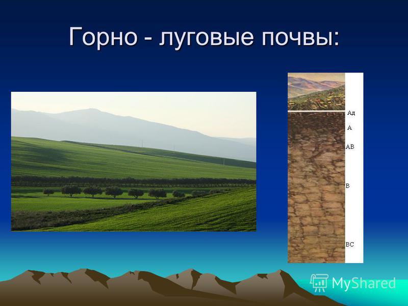 Горно - луговые почвы: