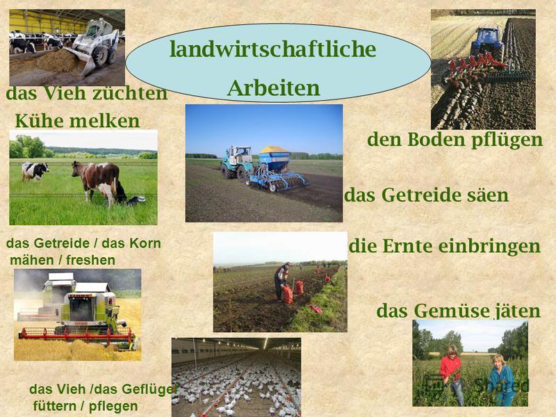 landwirtschaftliche Arbeiten das Vieh züchten Kühe melken den Boden pflügen das Getreide säen die Ernte einbringen das Gemüse jäten das Getreide / das Korn mähen / freshen das Vieh /das Geflügel füttern / pflegen