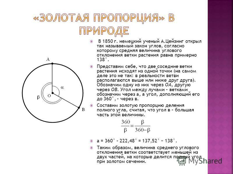 В 1850 г. немецкий ученый А.Цейзинг открыл так называемый закон углов, согласно которому средняя величина углового отклонения ветки растения равна примерно 138°. Представим себе, что две соседние ветки растения исходят из одной точки (на самом деле э