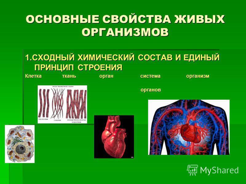 ОСНОВНЫЕ СВОЙСТВА ЖИВЫХ ОРГАНИЗМОВ 1. СХОДНЫЙ ХИМИЧЕСКИЙ СОСТАВ И ЕДИНЫЙ ПРИНЦИП СТРОЕНИЯ Клетка ткань орган система организм органов органов