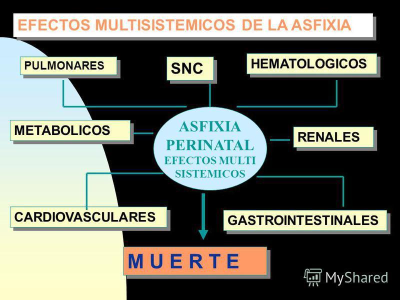 PIRUVATO ACETIL Co A LACTATO FUMARATO ISOCITRATO SUCCINATO O 2 ACIDO LACTICO AT P Ciclo de Krebs H2O