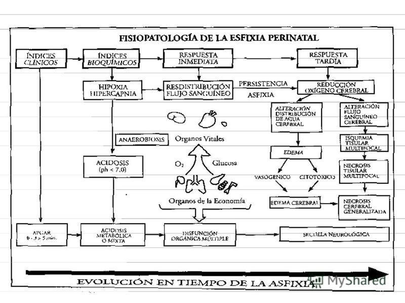 METABOLISMO DEL ADENOSIN TRIFOSFATO EN CONDICIONES HIPOXICAS.