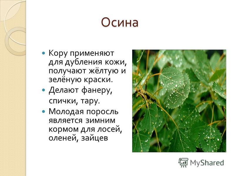 Легенда Легенда Само название « берёза » своими корнями связано с именем одной из самых почитаемых богинь древней Руси – Берегиней, матерью всех духов и всех богатств.