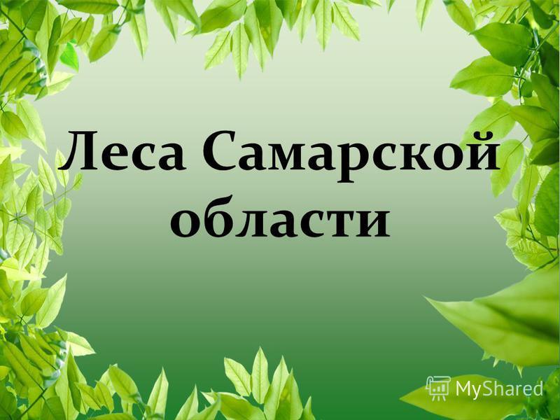 Леса Самарской области