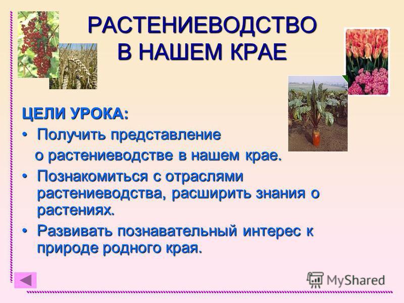 РАСТЕНИЕВОДСТВО В НАШЕМ КРАЕ ЦЕЛИ УРОКА: Получить представление Получить представление о растениеводстве в нашем крае. о растениеводстве в нашем крае. Познакомиться с отраслями растениеводства, расширить знания о растениях.Познакомиться с отраслями р