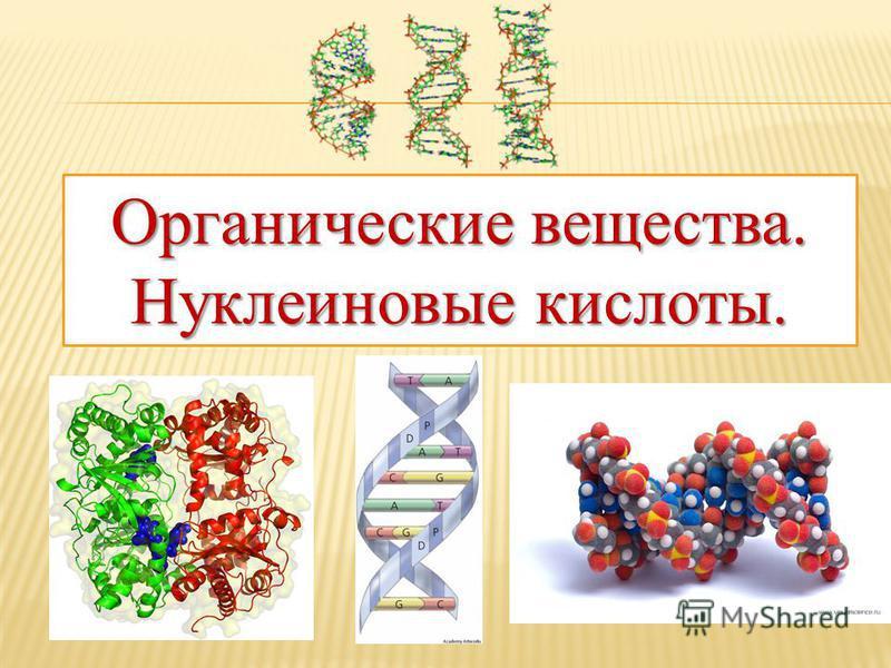 Органические вещества. Нуклеиновые кислоты.