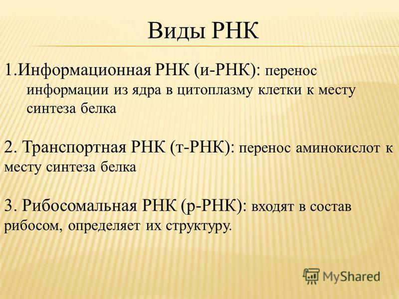 Виды РНК 1. Информационная РНК (и-РНК): перенос информации из ядра в цитоплазму клетки к месту синтеза белка 2. Транспортная РНК (т-РНК): перенос аминокислот к месту синтеза белка 3. Рибосомальная РНК (р-РНК): входят в состав рибосом, определяет их с