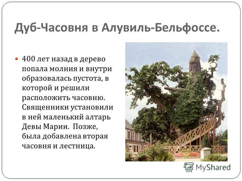 Дуб - Часовня в Алувиль - Бельфоссе. 400 лет назад в дерево попала молния и внутри образовалась пустота, в которой и решили расположить часовню. Священники установили в ней маленький алтарь Девы Марии. Позже, была добавлена вторая часовня и лестница.