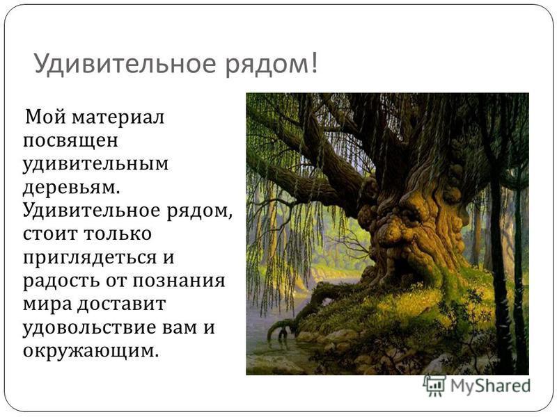 Удивительное рядом ! Мой материал посвящен удивительным деревьям. Удивительное рядом, стоит только приглядеться и радость от познания мира доставит удовольствие вам и окружающим.