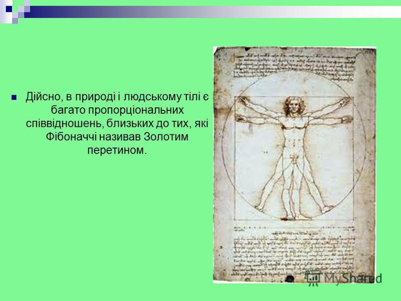 Дійсно, в природі і людському тілі є багато пропорціональних співвідношень, близьких до тих, які Фібоначчі називав Золотим перетином.