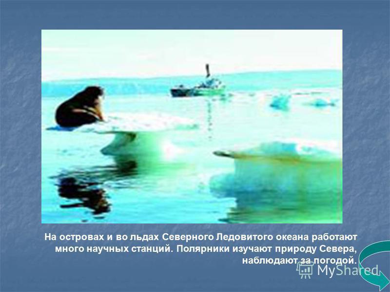 На островах и во льдах Северного Ледовитого океана работают много научных станций. Полярники изучают природу Севера, наблюдают за погодой.