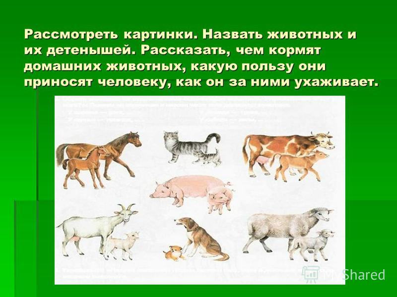 Рассмотреть картинки. Назвать животных и их детенышей. Рассказать, чем кормят домашних животных, какую пользу они приносят человеку, как он за ними ухаживает.