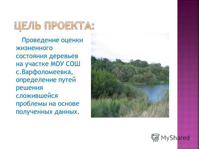 Проведение оценки жизненного состояния деревьев на участке МОУ СОШ с.Варфоломеевка, определение путей решения сложившейся проблемы на основе полученных данных.