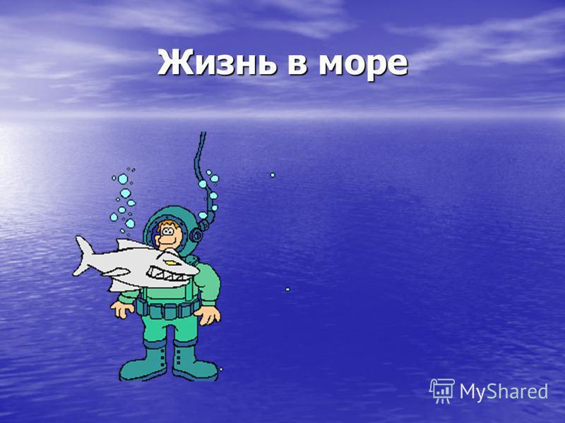 Жизнь в море