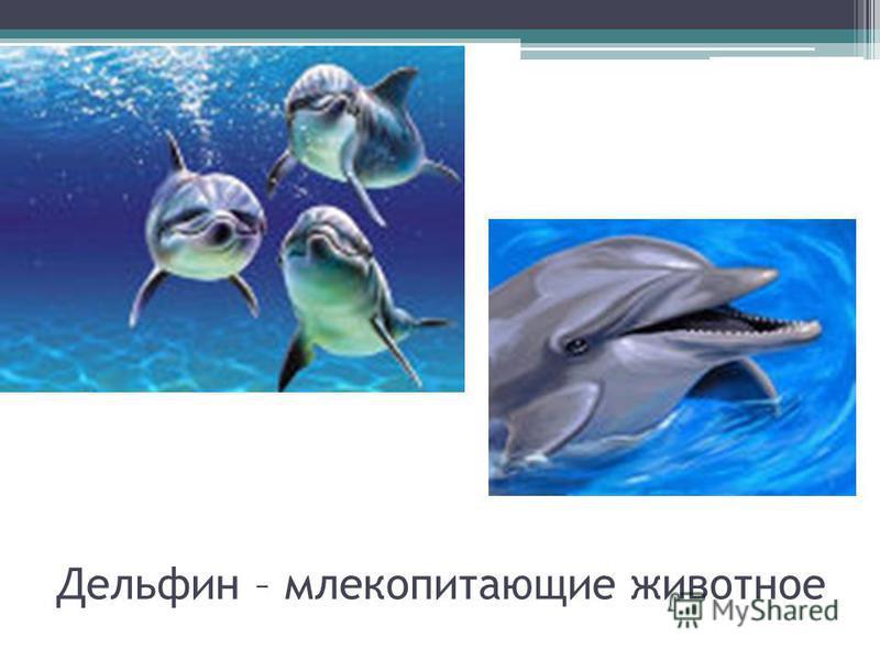 Дельфин – млекопитающие животное