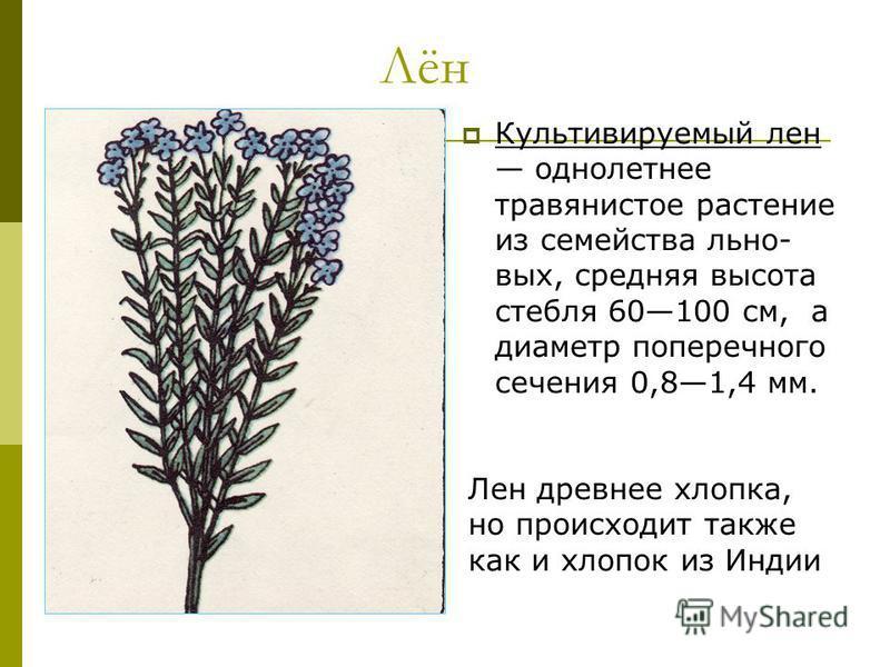 Лён Культивируемый лен однолетнее травянистое растение из семейства льна- вых, средняя высота стебля 60100 см, а диаметр поперечного сечения 0,81,4 мм. Лен древнее хлопка, но происходит также как и хлопок из Индии