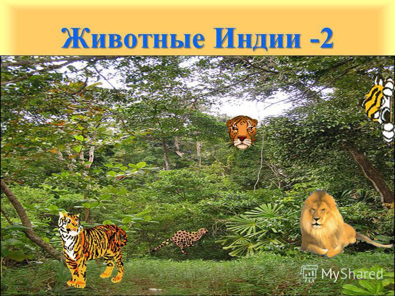 Животные Индии -2